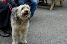 Eerste foto, lieve hond ; mooiste hond van Amsterdam zei je baasje.